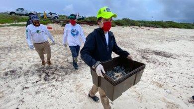 Photo of Liberan más de 100 mil crías de tortugas en Cozumel
