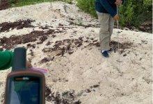 Photo of Puerto Morelos recibe a las primeras tortugas de la temporada de anidación