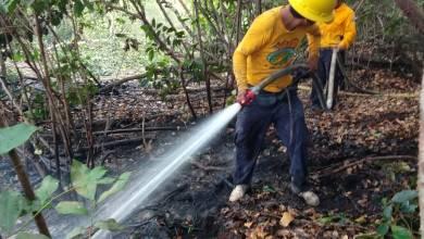 Photo of Bajo control incendio forestal en Bacalar: Protección Civil
