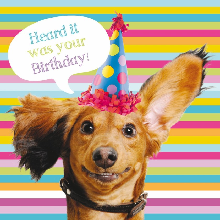 pet pawtrait card sausage dog party birthday card