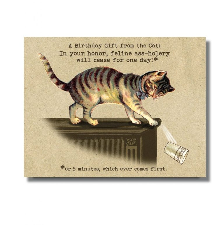 oso bean present from cat birthday card
