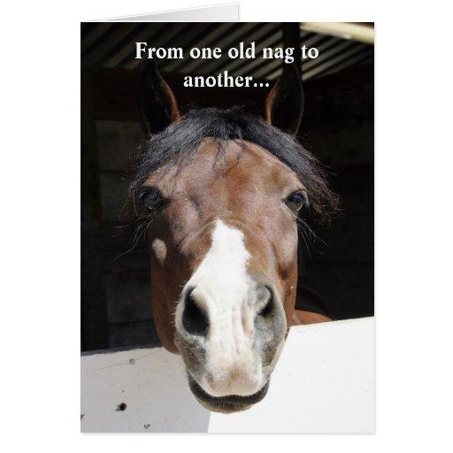 barn horse old nag happy birthday card zazzle