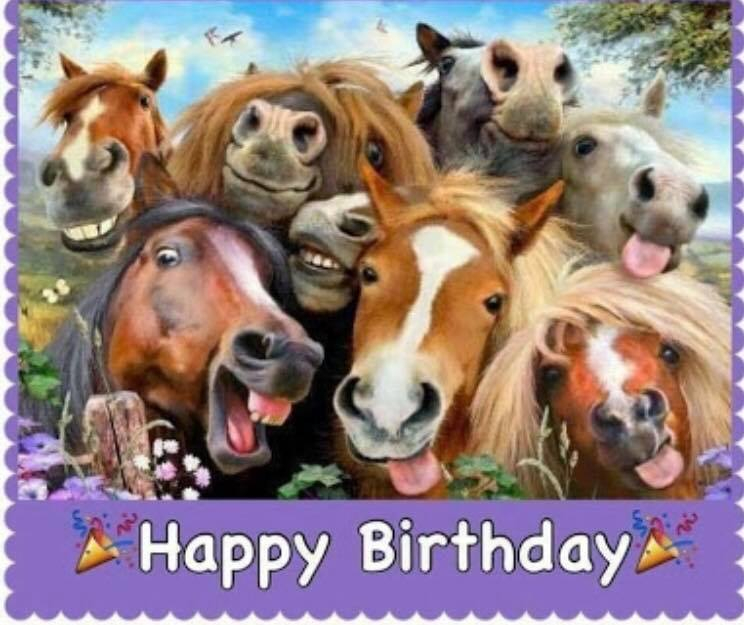 happy birthday to all our fantastic horses that pic