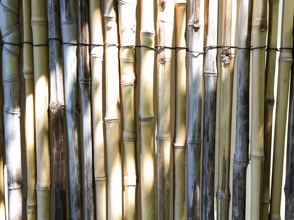 Wall of bamboo