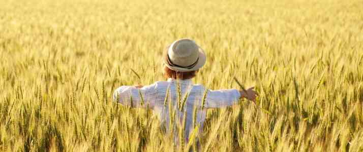Person In a Field of Corn
