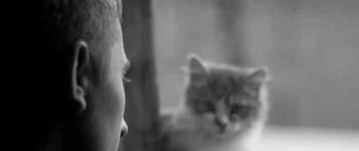Person Looking at Cat Through a Window