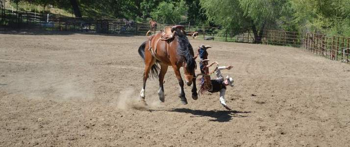 Horse throwing rider off