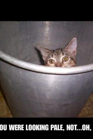 "A cat, in a bucket, looking ""pale"""