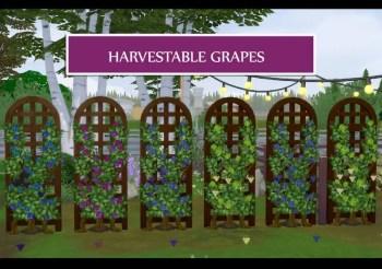 ▷ Cultivez des Vignes ! Par Icemunmun