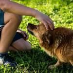 avvicinare cane sconosciuto