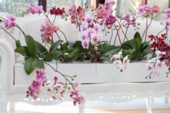 orkide-bakimi-3