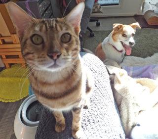 濃茶猫を後ろからチラ見するひな