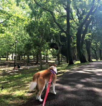 公園を歩くひな