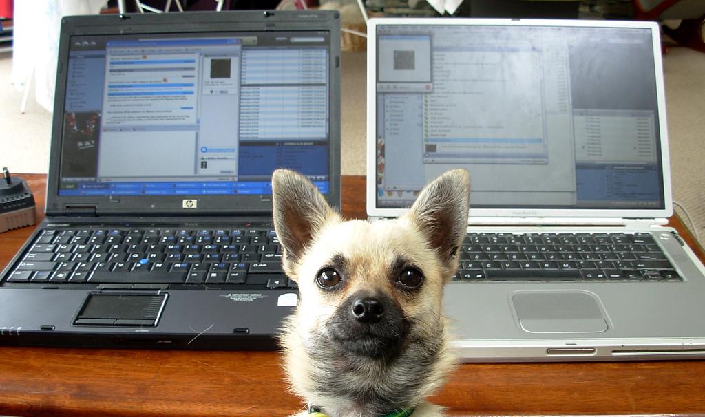 dog business website
