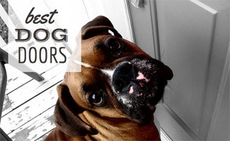 best dog doors by type liberate your