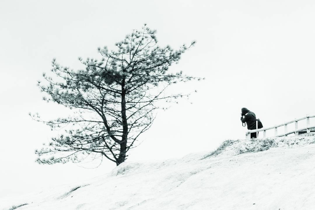 İnsan ağacı ...
