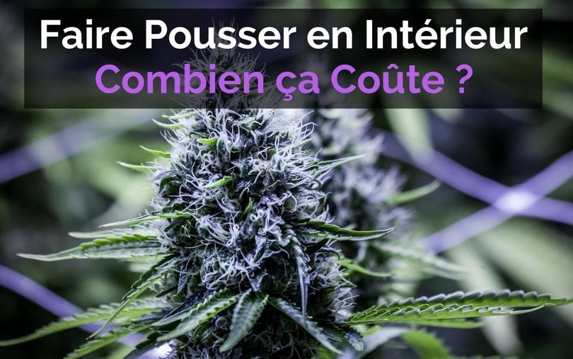 Faire Pousser en Intérieur : Combien ça Coûte ? - Cannabible.org