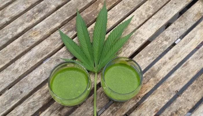 raw marijuana juice