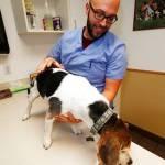 Científicos en EEUU quieren estudiar marihuana veterinaria