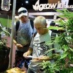 Cientos de extranjeros llegaron a la Expocannabis 2017