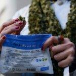 Uno de cada tres consume marihuana a través del mercado legal