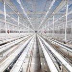 Preparado el invernadero de Ondara en Garray (Soria) para el cultivo de cannabis medicinal