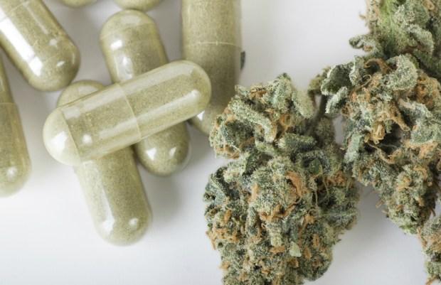 pharmaceutical-vs-herbal-cannabis