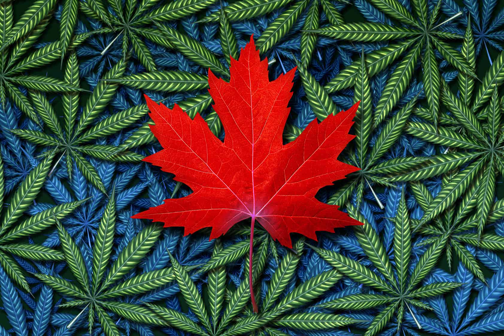 Maple leaf and cannabis for ACMPR