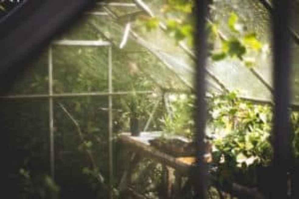 greenhouse for growing marijuana