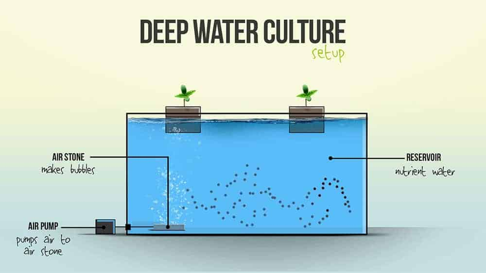 Diagram of Deep Water Culture Hydroponic System