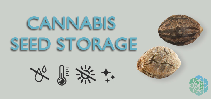 Cannabis Seed Storage