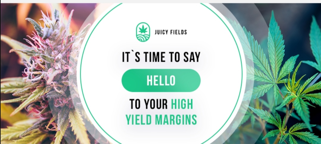 Investing in medical cannabis has never been easier!