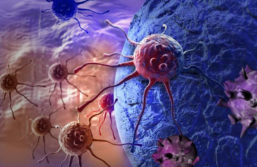 Image result for CANNABIS KILLS CANCER, MULTIPLE STUDIES CONFIRM