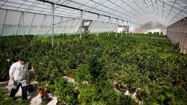 Les offres d'emploi se multiplient dans l'industrie du cannabis au Canada