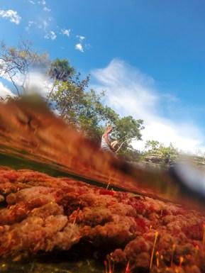 Fotografía al estilo Half - Half Underwater del río Caño Cristales