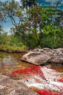 Caño Cristales - Sierra de la Macarena, Colombia / Fotografía por Mario Carvajal