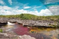 Río Caño Cristales en Colombia / Fotografía por Mario Carvajal