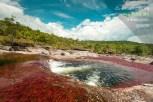 El río más hermoso del mundo en Colombia: Caño Cristales / Fotografía por Mario Carvajal