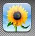photo_icon
