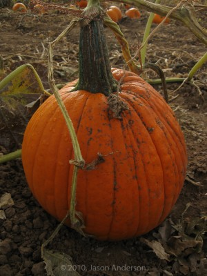 Pumpkin Trip 2
