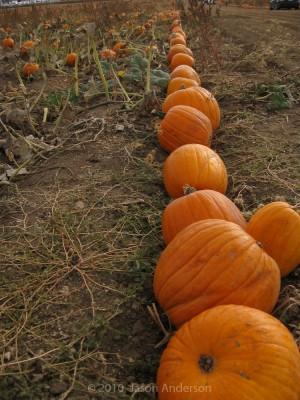Pumpkin Trip 4
