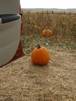 Pumpkin Trip 7