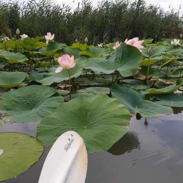 Canoa-kayak: un'immersione nella bellezza