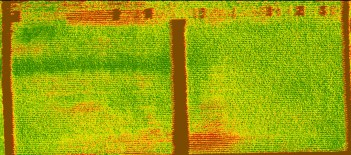 NDVI image of corn