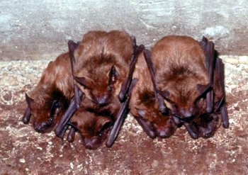 How To Get Rid Of Bats In Your House 6