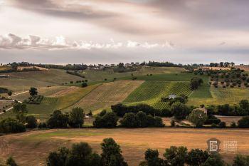 Paesaggi13