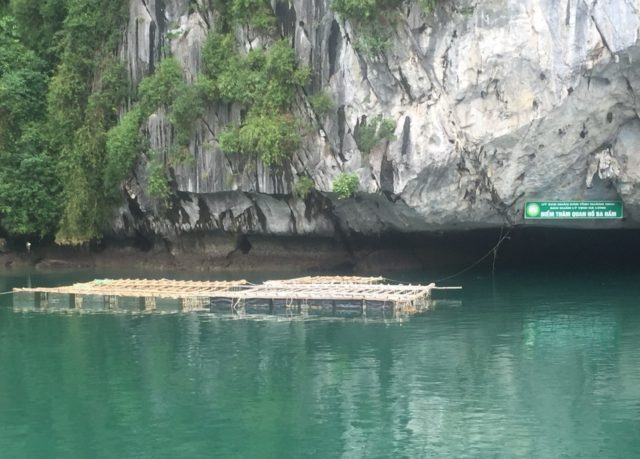 Floating Mussel Farm made of bamboo floating on a pontoon in Ha Long Bay, Vietnam