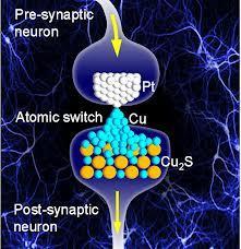 Cervello Quantistico e Processi di Memoria.