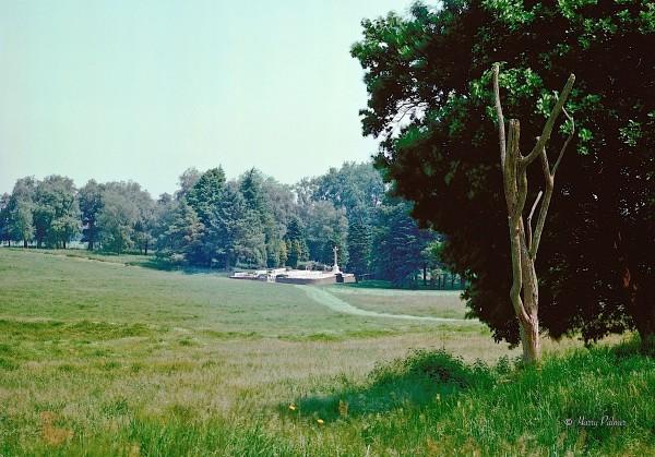 Danger Tree, Beaumont-Hamel, 1989 Harry Palmer, Photographer