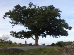 The Witness Tree Gettysburg, PA
